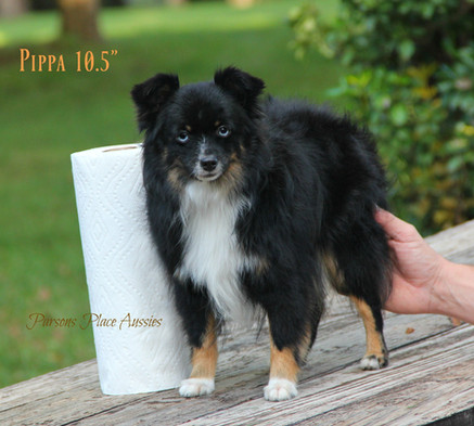 Pippa paper towel 1.jpg