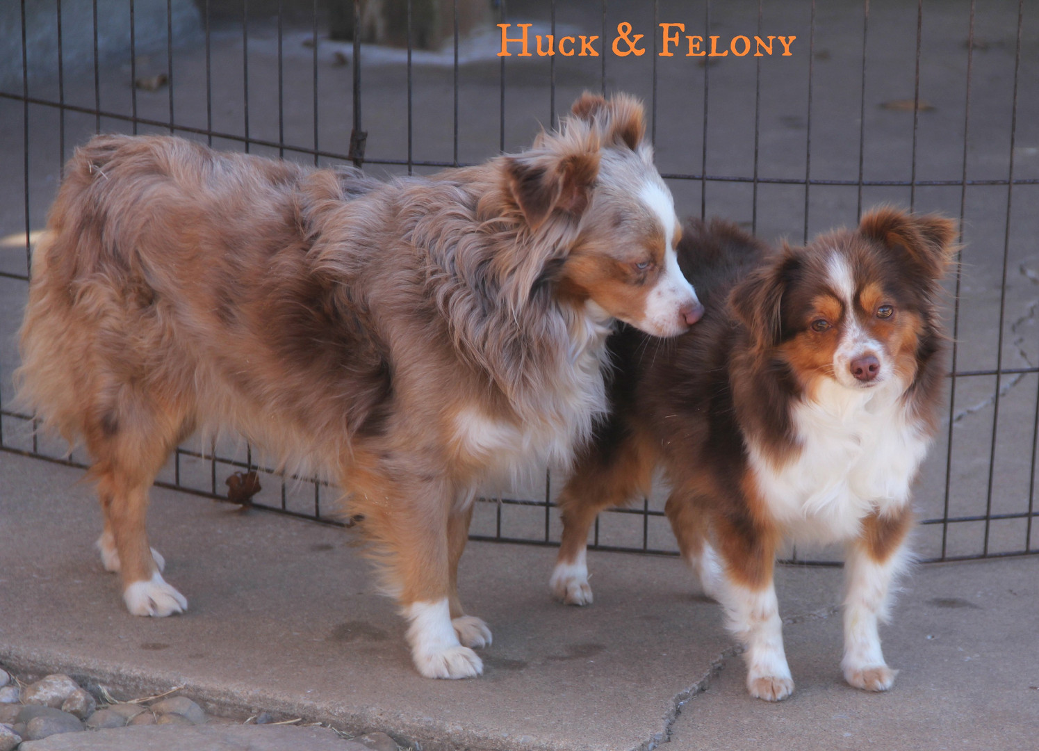 Huck and Felony 1.jpg