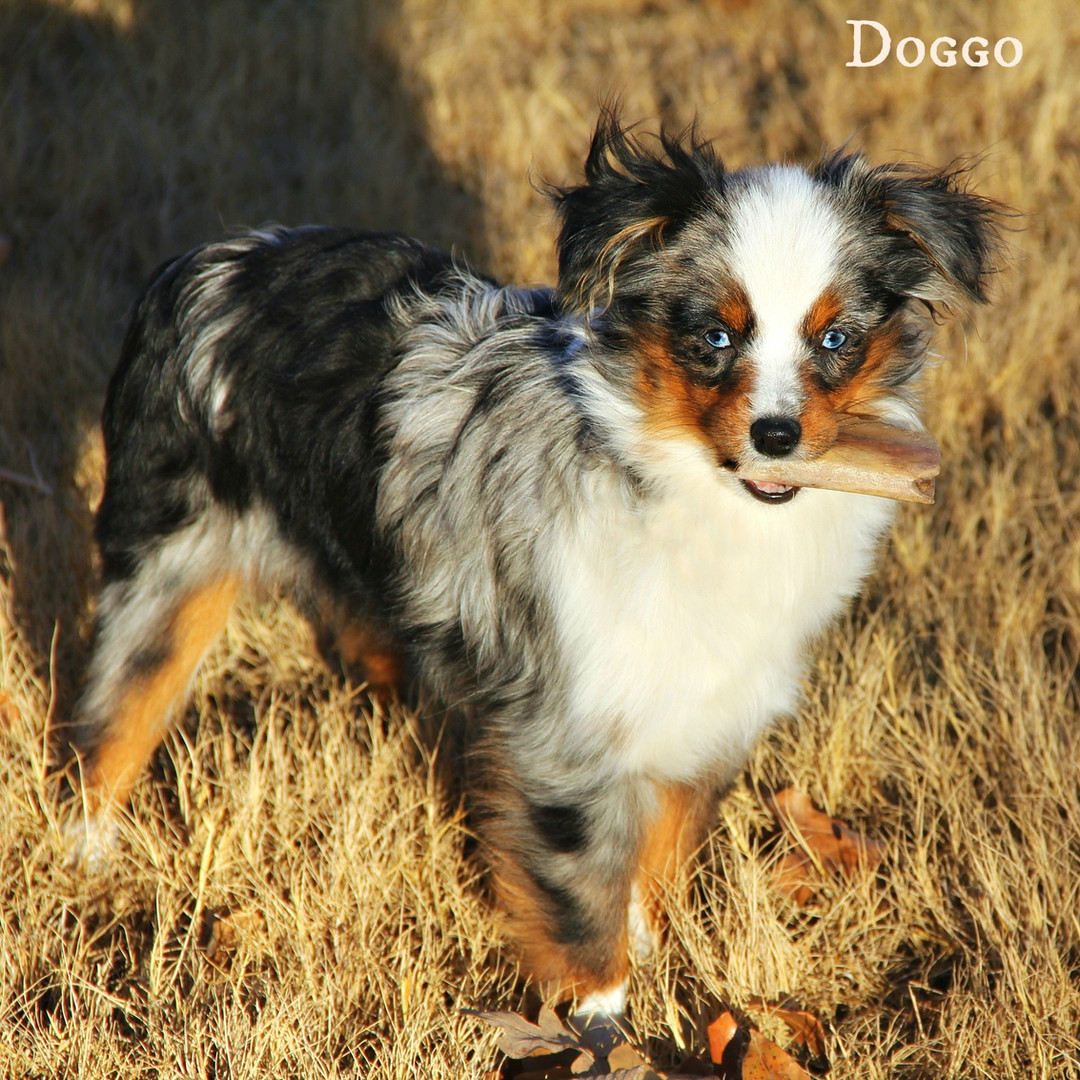 Doggo Dec16 1a.jpg
