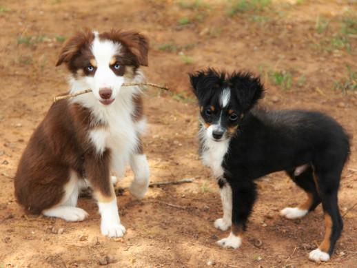 Pups pic 1.jpg