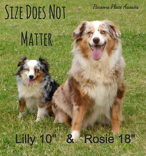 Rosie and Lilly_edited.jpg