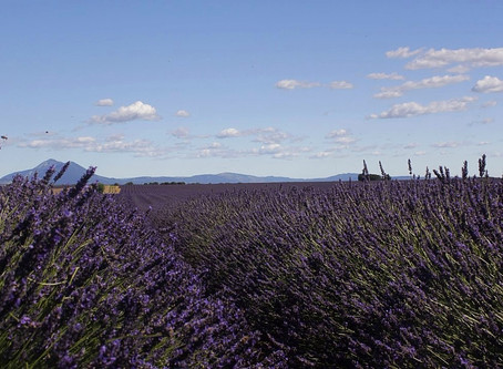 Exploring the Provence Alpes-Côte d'Azur & the best places to see