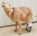 Goat 1.png