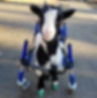Goat 2.png