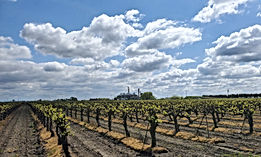 Cal-Wine-Vineyard_Image_edited.jpg