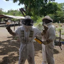 #bees #beekeeping #beehives #beekeeper #