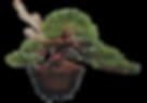 DC Tree Logo.png