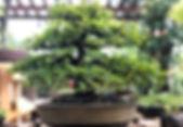 Outdoor Trees.JPG