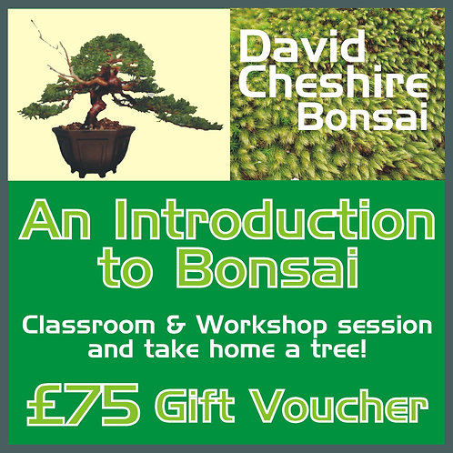 An Introduction to Bonsai