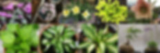 Accent Plants.JPG
