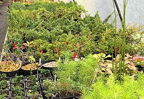 Nursery Plants.JPG
