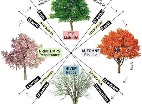 Shiatsu & changements de saisons
