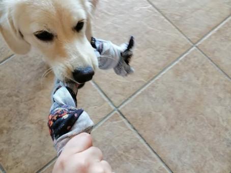 DIY | Φτιάχνουμε παιχνίδια για σκύλους και γάτες από ένα μπλουζάκι