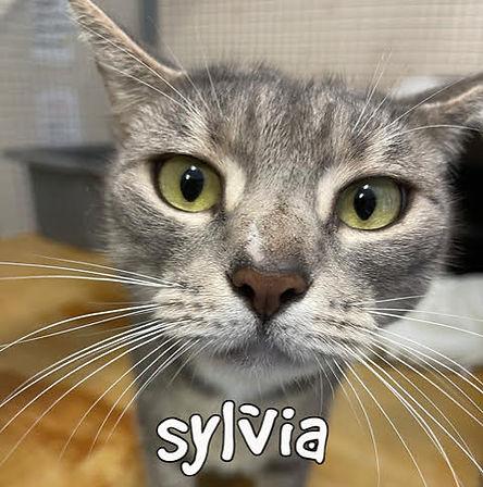 Sylvia (Mistybetter).jpg