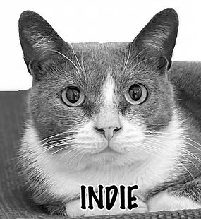 INDIE GS.jpeg