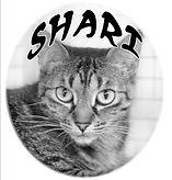 SHARI  2.jpeg