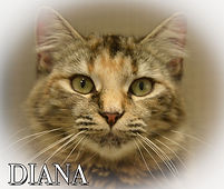 Diana TOOTSIE RGB.jpg