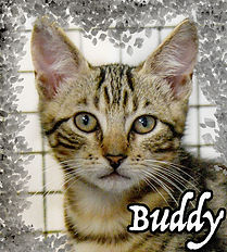 Buddy kitten.jpg