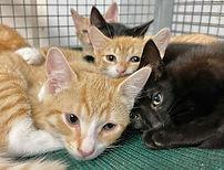 B kittens.jpg