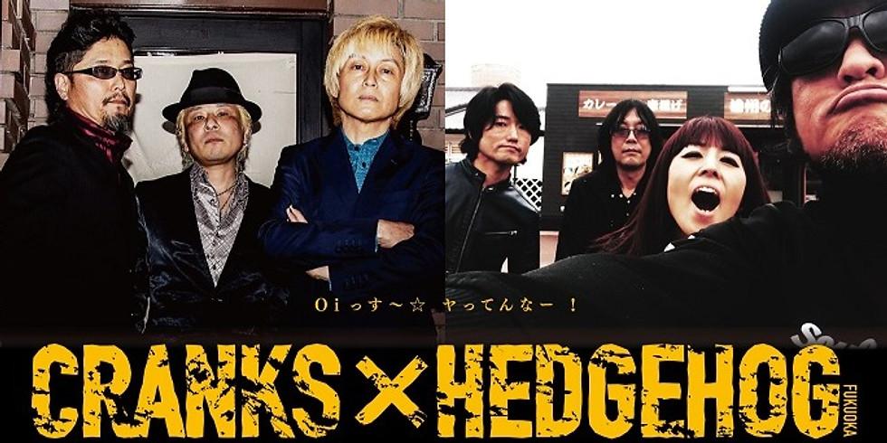 CRANKS × HEDGEHOG