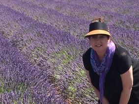 Lavender fields in Sault.
