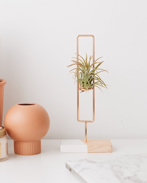 COCODEMA Squircle Airplant