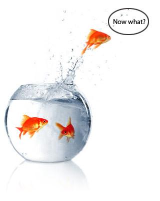 nowwhatfish.jpg