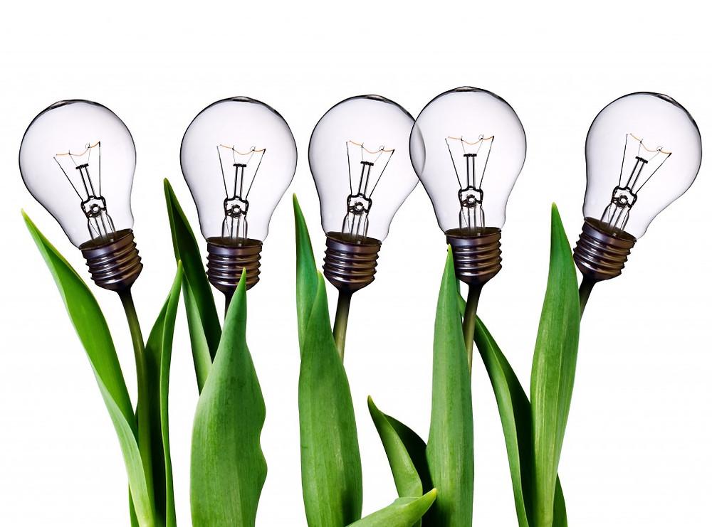 lightbulbsgrowing (1).jpg