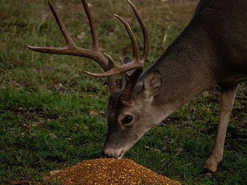 Big & J Deer Attractant.jpg