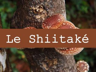 Le shiitaké, pour une flore intestinale saine et se protéger des virus respiratoires