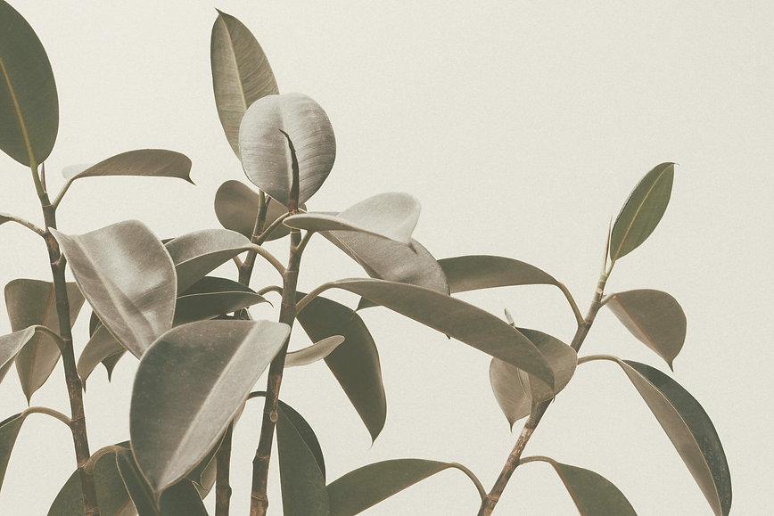 plantes%252050%2520pourcent%2520(1)_edit