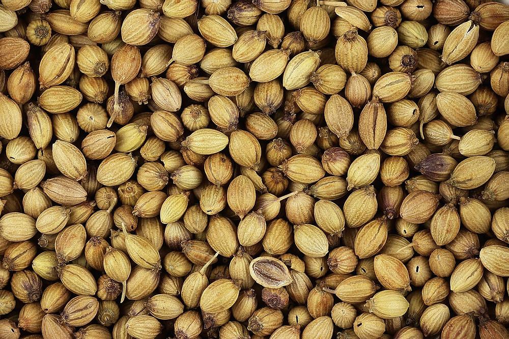 Photo de graines de coriandre