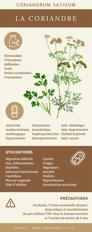 Infographie coriandre | phytothérapie, coriandrum sativum