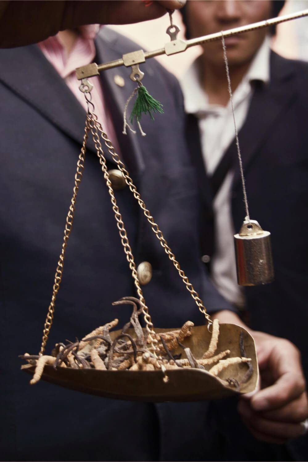 Le champignon médicinal cordyceps sinesis pesé sur le marché de Yush en Chine