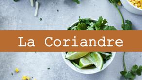 Faites la guerre aux biofilms avec la Coriandre ! | Digestion, migraines, candidose et bactéries...
