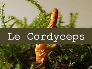 Le Cordyceps contre l'insuffisance rénale et cardiaque et pour renforcer l'immunité