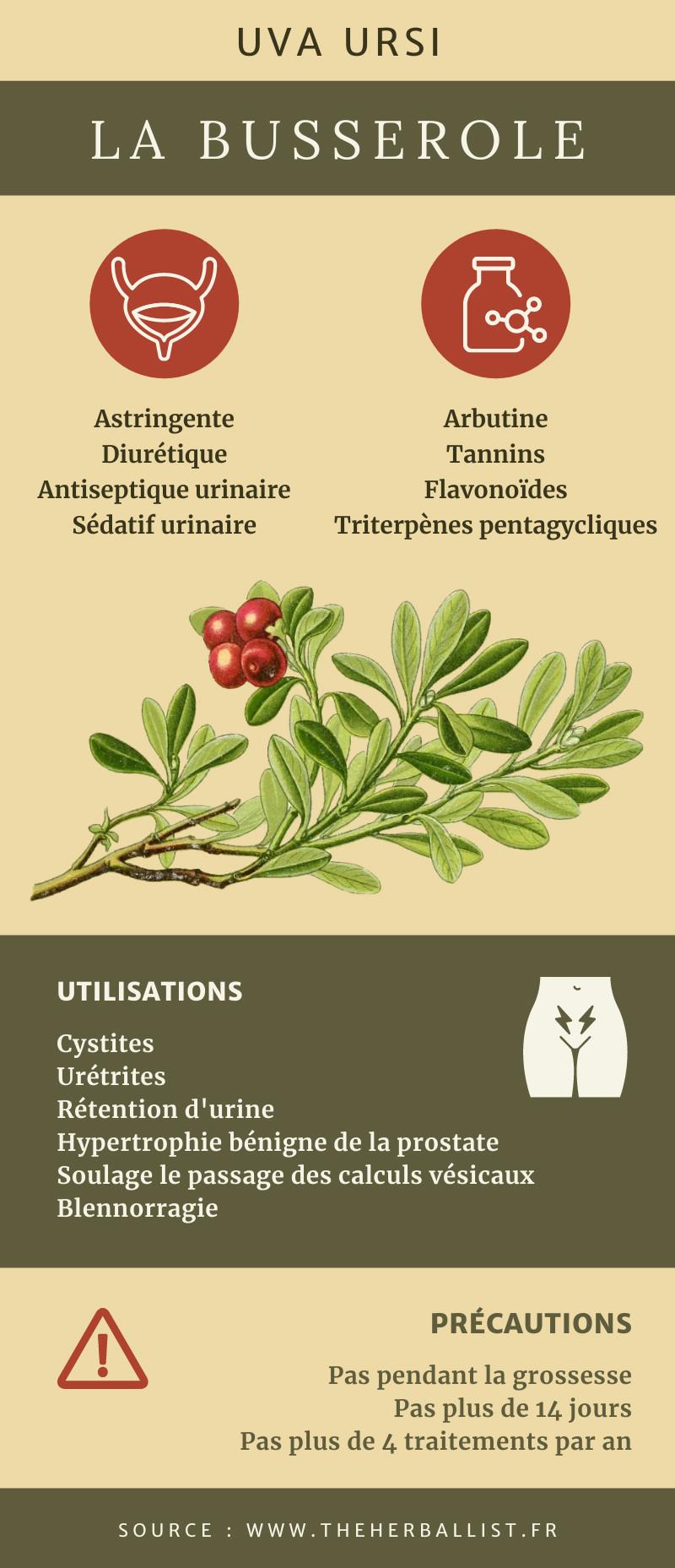 Infographie La Busserole contre les cystites