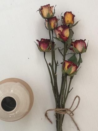 Queen ורדים