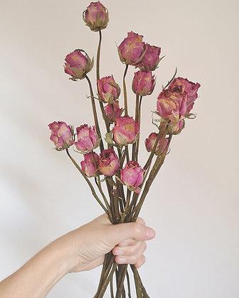 ורדים ורודים Large