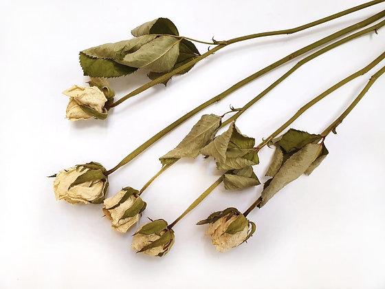 ורדים לבנים מיובשים