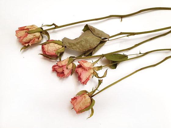ורדים ורודים מיובשים