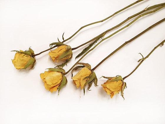 ורדים צהובים מיובשים