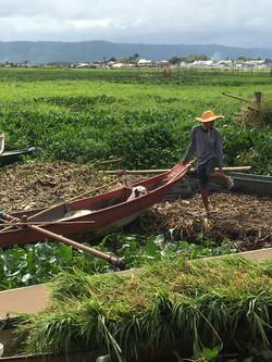 Local Fisherman Pantalan
