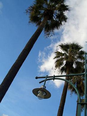 Lamp_Trees_Viva_Board_450x600.jpg