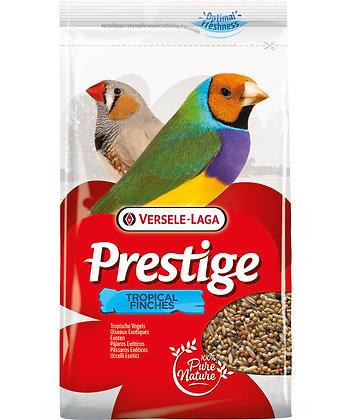 Oiseaux exotiques prestige