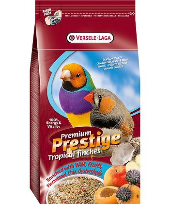 Oiseaux exotiques premium