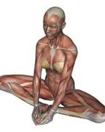 BUTTERFLY-BOUND ANGLE POSE.jpg