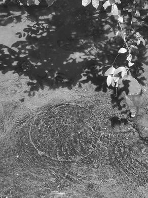 ©Gaëlle Abravanel, Cercle d'eau, série Nouveaux Paysages 2020