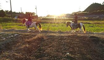 馬と自然と人が共生する生活文化を作る