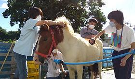 子供たちと馬の手入れ